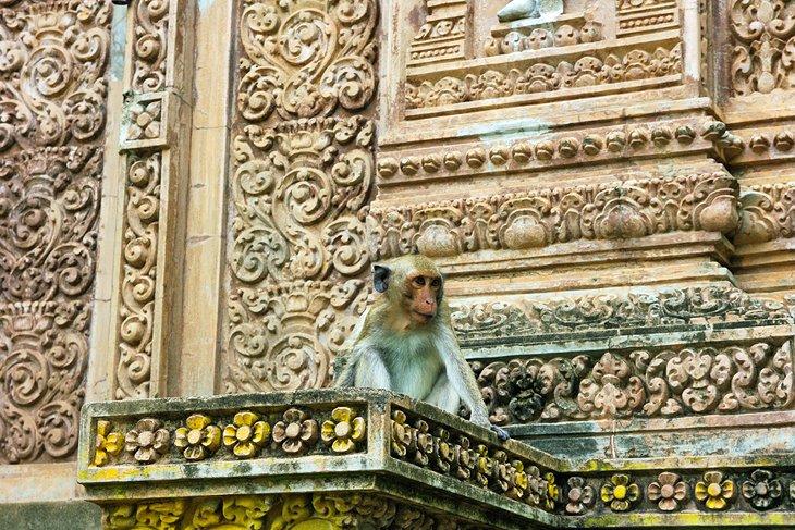 Du lịch Campuchia dịp tết Nguyên Đán